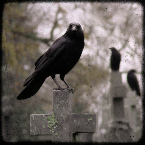 cemetery-crows-gothic-and-crows-art-photography