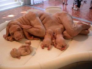 "Concept of a ""parahuman"" by Patricia Piccinini"